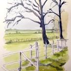 trees at LOtherton Hall